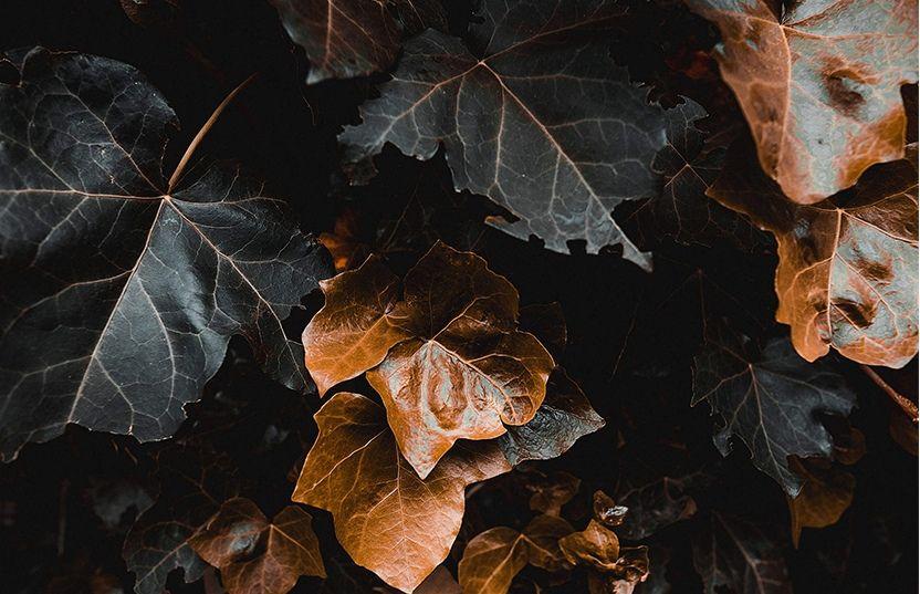 aunt leafes
